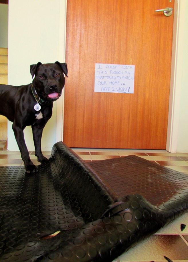 yay! my first dog shaming photo!